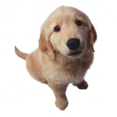 Diario de un perro.