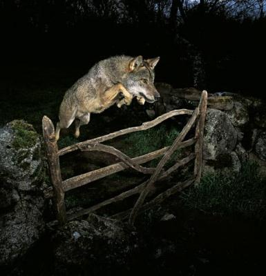 Ganador  Wildlife Photographer of the Year 2009